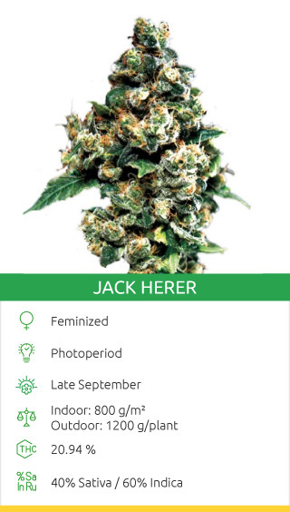 Jack Herer (Green House Seeds)