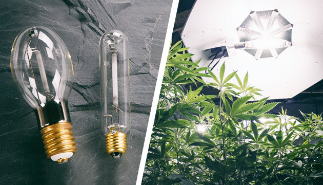 HID In Cannabis Growing