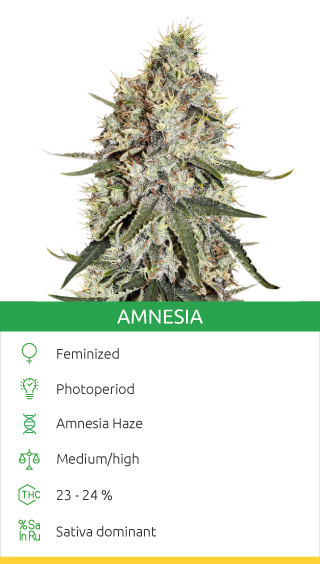 buy cannabis strains with psychedelic effects
