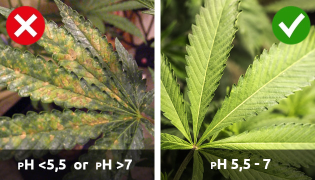 cannabis plant deficiencies
