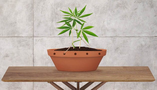 broaden your cannabis cultivation skills
