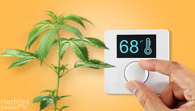 best temperature for flowering stage