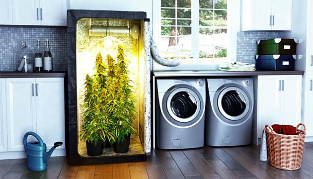 indoor weed grow tent