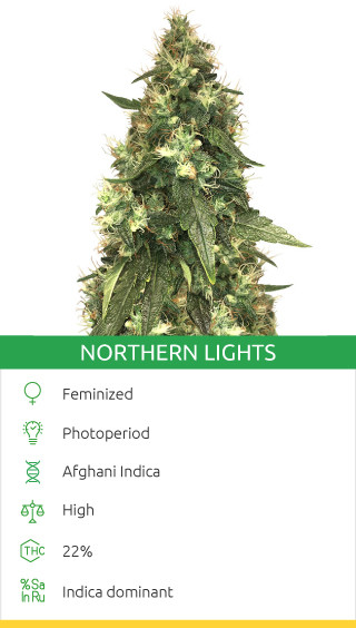 Northern Lights fem