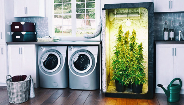 The Best Way To Grow Cannabis