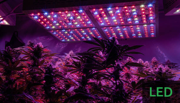 best lights for growing indoors