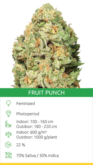 Fruit Punch seeds by Heavyweight Seeds