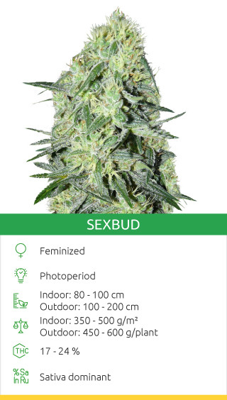 Buy SexBud seeds by Female Seeds