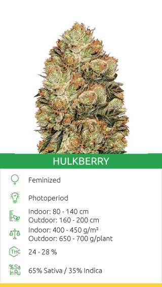 best outdoor sativa strains