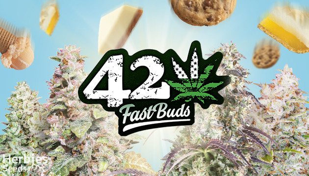 new strains from fastbuds