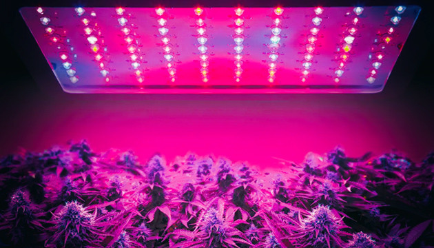 LED In Cannabis Growing