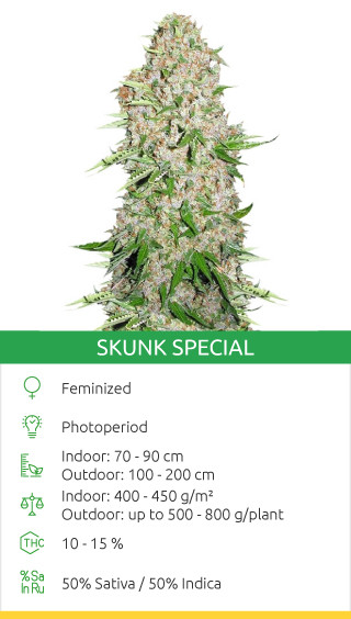 Skunk Special seeds by Female Seeds