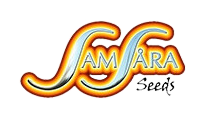 Buy cannabis strains by Samsara Seeds