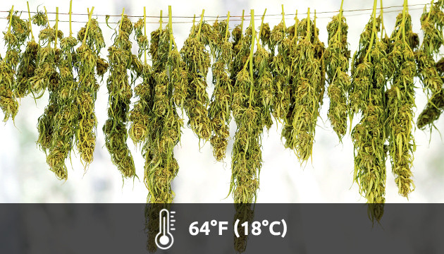grow room temperature too high