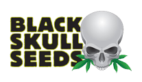 Buy cannabis strains by Blackskull Seeds