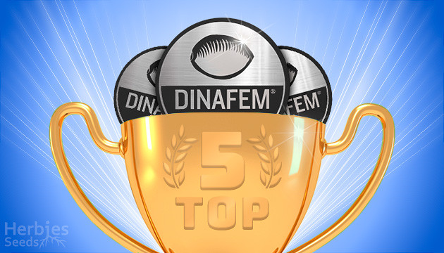 Dinafem Seeds Top 5 Reliable And Potent Products