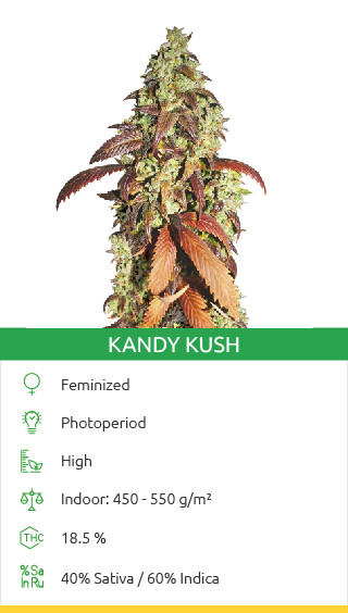 Kandy Kush seeds by Reserva Privada