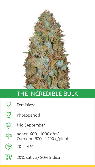 the incredible bulk canabis seeds