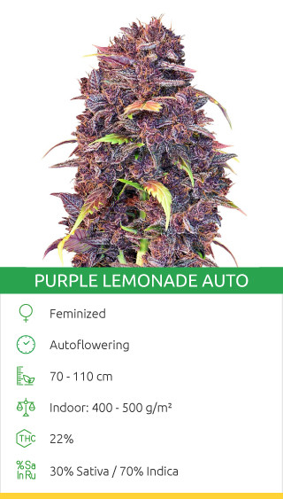 Purple Lemonade Auto fem