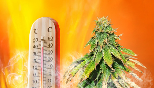 cannabis temperature