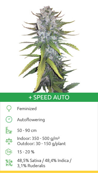 + Speed Auto seeds by Sweet Seeds