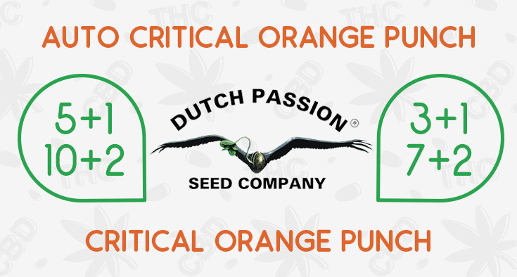Free Seeds From Dutch Passion