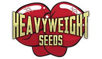 Cannabis-Strains von Heavyweight Seeds