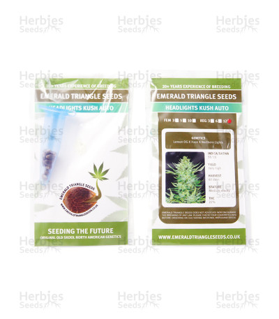 Headlights Kush Auto regular seeds
