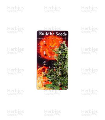 Buy Buddha Vesta Auto