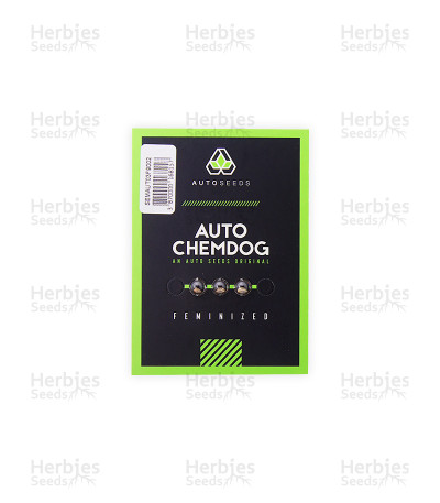 Auto Chemdog strain