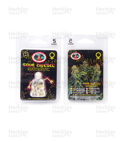 Sour Chiesel Automatic (Big Buddha Seeds)