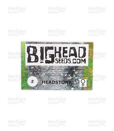 Headstone (Big Head Seeds)