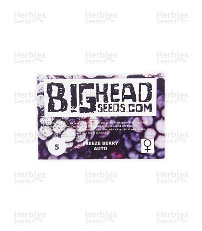 Freeze Berry Auto (Big Head Seeds)
