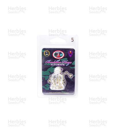 Buddha Haze Automatic (Big Buddha Seeds)