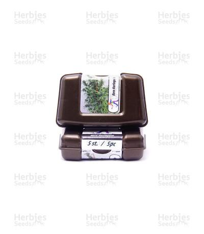 Harlequin CBD (Kera Seeds)