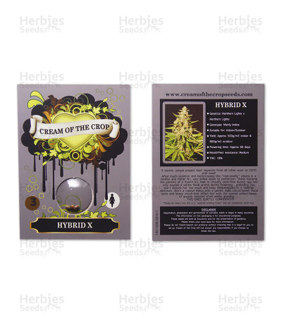 Hybrid X (Cream of the Crop Seeds) Cannabis-Samen