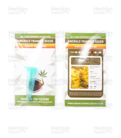 Cheesy Headband regular seeds