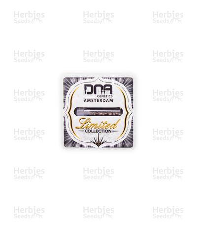 IsLAnd (DNA Genetics)
