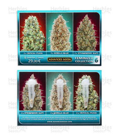 Graines de cannabis Feminized Collection #6 (Advanced Seeds)