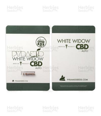 Buy Auto White Widow CBD by Pyramid Seeds