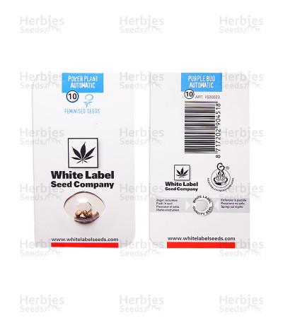 Power Plant Auto (White Label) Cannabis-Samen