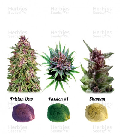 Buy Colour Mix 1 feminized seeds