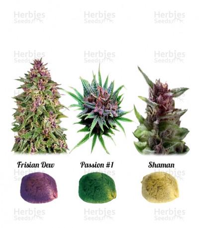 Buy Colour Mix 1 feminized seeds