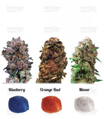 Buy Colour Mix 4 feminized seeds