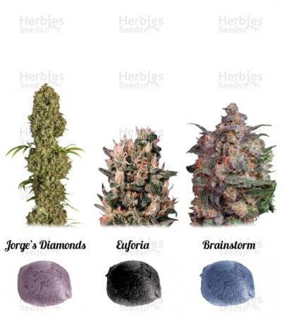 Buy Colour Mix 5 feminized seeds