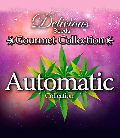 Buy Gourmet Collection - Automatic Strains #2 feminized seeds
